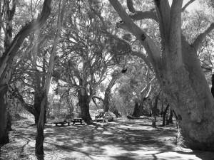 Kinchega, banks of the Darling River